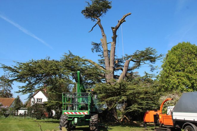 Get Expert Tree And Hedges Maintenance Through Tree Surgeons Slough